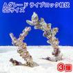 (海水魚)Aグレードライブロック 枝状SSサイズ(3個)(形状お任せ) 北海道・九州航空便要保温