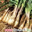 らっきょう 有機栽培 4kg 土付き 鹿児島県産 化学肥料・農薬不使用 国産 JAS認証 大きさおまかせ 冷蔵便 送料無料