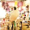 プエブコ PUEBCO バードオブジェ ARTIFICIAL BIRDS オウム Sサイズ 横向き 102078