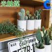 フェイクグリーン 観葉植物 光触媒 人工観葉植物 多肉植物 サボテン TRCA サボテンシリーズ