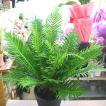 ミリオンバンブー ラッキーバンブー お洒落な編み込みタイプの観葉植物 6号鉢植え 80サイズ