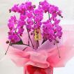 胡蝶蘭 3本立て ミディ系黄色  お祝いや誕生日・お供えなどの花ギフト