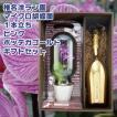 椎名洋ラン園 マイクロ胡蝶蘭 ピンク 1本立ち ボッテガ ゴールド スパークリングワイン 750ml ギフトセット シャンパン ワイン
