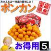 愛媛県産 ポンカン お得用 5kg
