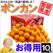 愛媛県産 ポンカン お得用 10kg
