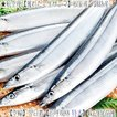 (送料無料 生サンマ 北海道産)根室 釧路(特大 浜呼び名)4kg前後26尾前後(獲れたて 生さんま 水揚げ日に空輸で翌日着 日帰りトロさんま 最高級 秋刀魚)