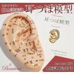耳つぼ模型《日本語版》17cmサイズ 日本語表記 耳模型 耳介図