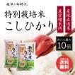 新米 お米 10kg 新潟産コシヒカリ 特別栽培米 白米 10kg (5kgx2袋) 平成30年産 送料無料 (北海道四国九州へは追加送料500円)