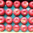 【出荷開始!糖度13度で甘酸っぱい】北海道産GREXのあかねリンゴ約5kg20〜23個