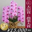 女性も嬉しい!ピンク胡蝶蘭のブランド品種
