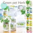 green pet Herb 育てるグリーンペットハーブ 全5種■ミント/イタリアンパセリ/バジル/レモンバーム/ワイルドストロベリー GD444【 栽培キット】