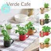 Verde Cafe ヴェルデカフェ 全4種■ミント/バジル/レモンバーム/ワイルドストロベリー GD549【栽培キット】