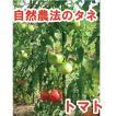 トマト 自生え大玉 小袋〈10粒〉(じばえおおだま)  大玉トマト 自然農法種子 無農薬 有機 交配種