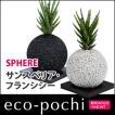 エコポチ サンスベリア・フランシシー × スフィア (eco-pochi)