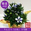 敬老の日花鉢「リンドウ 白寿 5号鉢」 敬老の日 誕生日 お祝い 花 ギフト プレゼント 花鉢 鉢植え 竜胆 リンドウ 送料無料
