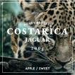 コスタリカ コーヒー豆 エル・バポール農園 200g 自家焙煎 スペシャルティコーヒー|袋