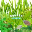 (水草)水草鉛巻きMIX 9種+水草その前に 1個 前景〜後景までバランス良く揃ったオススメ商品です