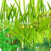 (水草)水草おまかせ5種 10本セット