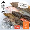 【お家で魚介を楽しもう】鮮魚BOXお買い得3キロセット(大人2人子供2人家族で4.5日楽しめる)お魚さばき教室つき/石巻津田水産厳選/夕食が楽しみに