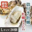 牡蠣まさむねLサイズ20個/さっぱりした味わい!/石巻牧浜 漁師直送/【加熱用殻付】