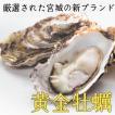 殻付き黄金牡蠣15個/潮香焼缶々セットのおかわりに最適/女川/独自殺菌で安心安全!