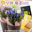 敬老の日 選べる花鉢と和風スイーツ