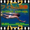 ハーフフィルム現像 + CD書込 + ネガインデックス + CDインデックス