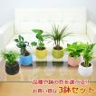 ミニ観葉植物 ハイドロカルチャー陶器鉢付き 3鉢セッ...