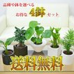観葉植物ミニ ハイドロカルチャースタイリッシュ陶器鉢付き 4鉢セット