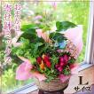 誕生日の花 鉢植え 花 ギフト おまかせ寄せ鉢ミックス Lサイズ お祝い 花 おしゃれ 寄せ植えギフト 翌日配達