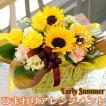 ひまわり アレンジメント アーリーサマー 向日葵(ヒマワリ) ギフト プレゼント 贈り物