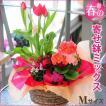 春の寄せ鉢ミックス Mサイズ チューリップ 鉢植え 誕生日 お祝い プレゼント 送料無料 ホワイトデー花ギフト