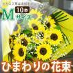 花 ギフト ひまわりの花束  ヒマワリ 向日葵 Mサイズ 誕生日プレゼント