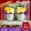 お線香セット 白陶器ライン入りイエローツイン仏花(BS-003)
