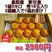 新甘泉 鳥取産 1箱5kg 秀18玉入り 2箱購入で1箱おまけ!