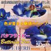 [安心・安全な自社契約農園産] バタフライピー 乾燥花弁タイプ/50g(たっぷり100杯分!)