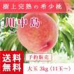 福島県産 桃 もぎたて完熟 川中島 大玉 約3kg 11〜玉 送料無料 阿部農縁 産地直送 もも モモ