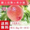 福島県産 桃 もぎたて完熟 川中島 特玉 約3kg 8〜10玉 送料無料 阿部農縁 産地直送 もも モモ