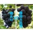 【減農薬】殺虫剤不使用ぶどう ブラックオリンピア食べ比べ(約2kg)