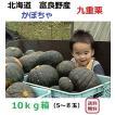 富良野産 カボチャ 九重栗 10kg箱(5〜6玉入)