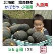 富良野産 カボチャ 九重栗 5kg箱 (3玉入り)