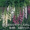 送料無料 6苗セット  ジギタリス 全4色 ローズ クリーム ラベンダー ホワイト ミックスから選べる 耐寒性 宿根草