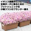 送料無料 3個セット 小輪ツツジ プランター植え 横幅約33センチ つつじ 鉢植え
