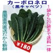 千葉県産 黒キャベツ カーボロネロ 常温便 生イタリア野菜 鮮度保持フィルム包装 100g 税込 定額送料 トレファームの砂栽培育ちで元気な野菜です!