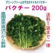 パクチー 200g 生野菜 税込 常温便 鮮度保持フィルム包装 トレファームの砂栽培育ちで元気な野菜です!