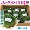 レタス フリルアイス 10袋セット クール便 鮮度保持フィルム包装 生野菜 税込 トレファームの砂栽培育ちで元気な野菜です!
