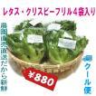 レタス フリルアイス 4袋セット クール便 鮮度保持フィルム包装 生野菜 税込 トレファームの砂栽培育ちで元気な野菜です!