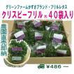グリーンファームかずさオリジナルフリルレタス 業務用 40袋セット 常温便 鮮度保持フィルム包装 生野菜 税込 トレファームの砂栽培育ちで元気な野菜です!