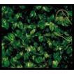 エレファントカシマシ / the elephant kashimashi 25th anniversary great album deluxe edition series 2 ココロに花を deluxe edition(Blu-specCD2+... [CD]