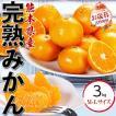 完熟みかん 3kg (1箱)贈答用ギフト・熊本県産【オレンジベルト】送料無料
